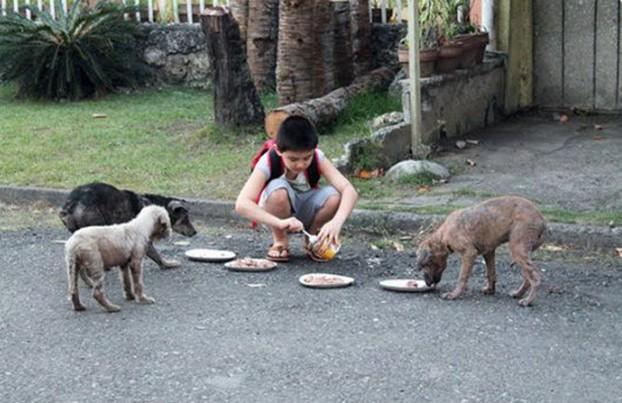 Kwikku, Memberi makan anjing liar