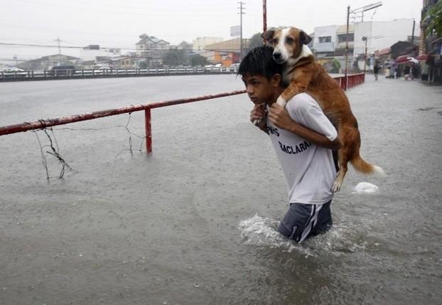 Kwikku, Anjing juga pantas untuk hidup