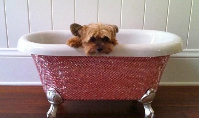 Kwikku, Bak mandi untuk anjing yang dilapisi kristal swarovski Rp  juta Gila banget