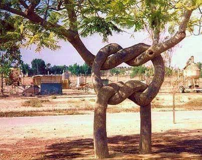 Kwikku, Bahkan ada juga yang membentuk tali simpul yang seolah nggak bisa dipisahkan