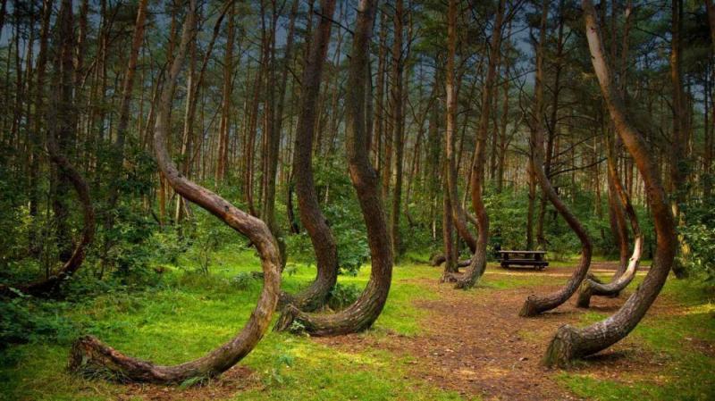 Kwikku, Sekumpulan pohon dengan bentuk batang yang kompakan meliukliuk