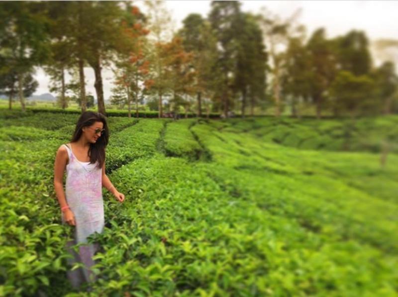 Kwikku, Ia juga singgah ke kebun teh di Jawa Barat