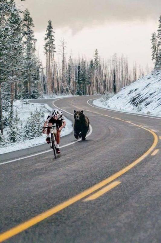 Kwikku, Motivasi saat balap sepeda dikejar beruang kutub