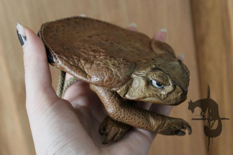 Kwikku, Dompet dari katak asli yang diawetkan ini bisa kamu dapatkan saat berkunjung ke Australia Jangan lupa beli ya