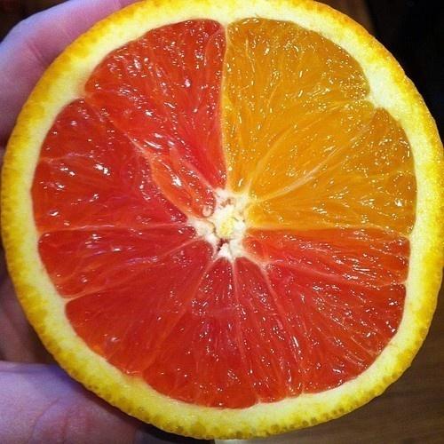 Kwikku, Momen jeruk dengan berbagai warna ini jarang banget terjadi