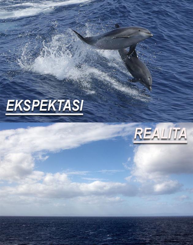 Kwikku, Kita akan membayangkan ada lumbalumba yang berenang disekitar kapal pesiar namun hal itu jarang terjadi malah bisa jadi kamu akan hanya melihat hamparan laut lepas saja