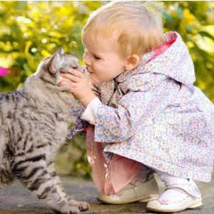 Kwikku, Pada tahun  Agen Intelejen AS menggunakan kucing sebagai matamata saat perang dingin Mereka memantau pergerakan Kremlin dan dubes Rusia dengan menanamkan transmitor kecil di rangka kucing dan menempatkan mikrofon di saluran telinga kucing
