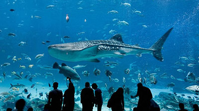 Kwikku, Georgia Aquarium
