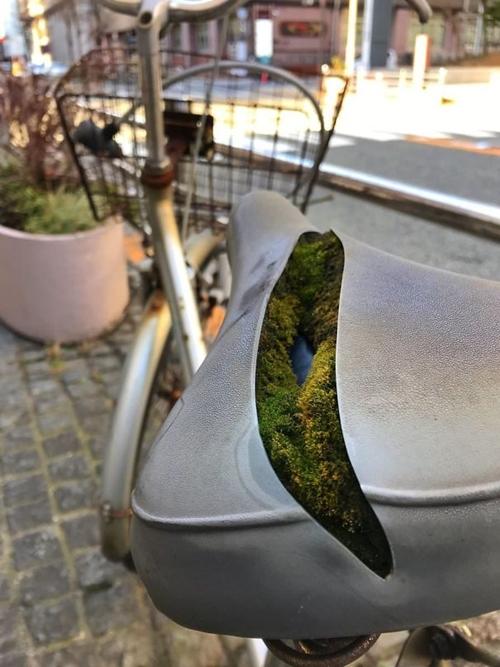 Kwikku, Penampakan layaknya hutan yang dibelah oleh sungai di tengan dudukan sepeda