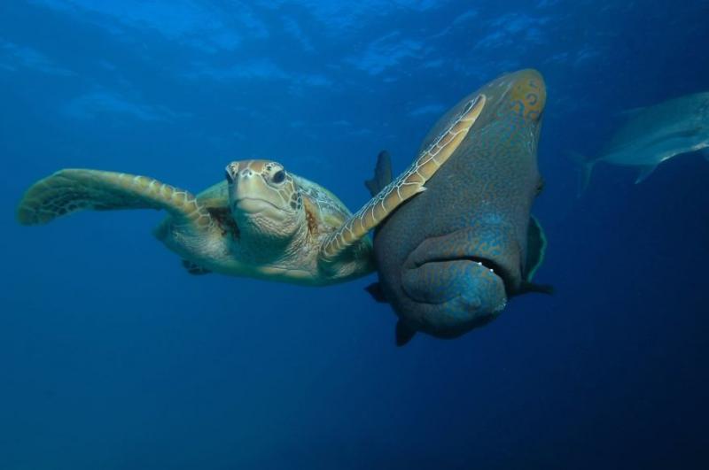 Kwikku, Pemenang kategori The Padi Under The Sea Slap oleh Troy Mayne