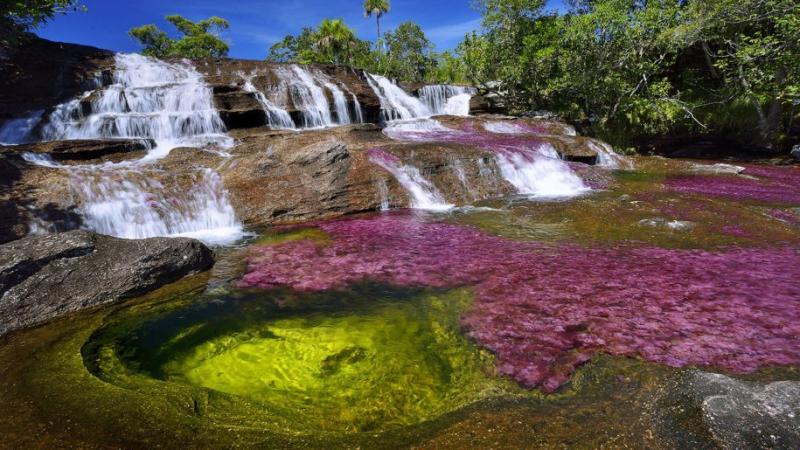 Kwikku, The Cano Cristales Serrania de la Macarena Colombia