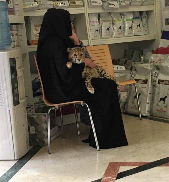 Kwikku, Ibuibu tampak menggendong anak cheetah