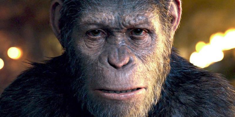 Kwikku, Simpanse