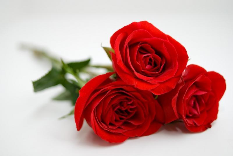 Kwikku, Bunga Mawar