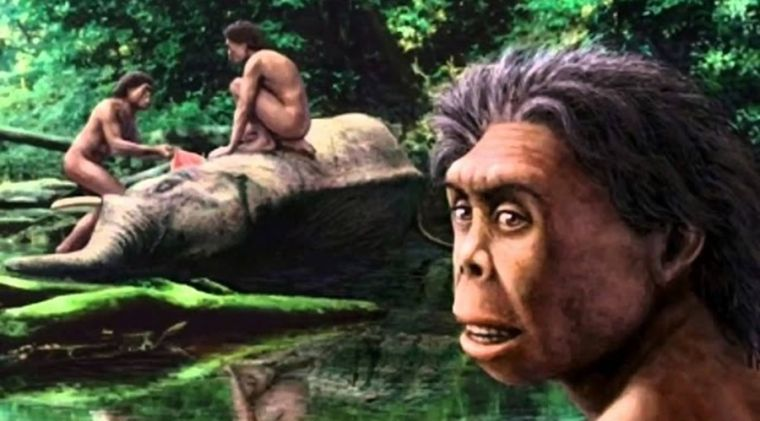 Kwikku, Homo Florensis