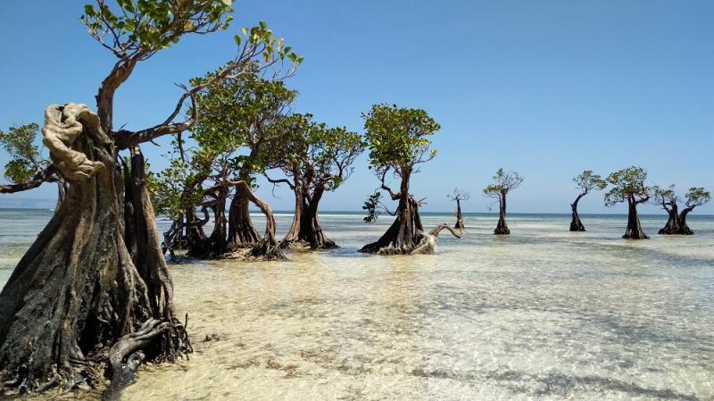 Kwikku, Pantai Walakiri  Sumba Timur