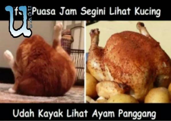 Kwikku, Kucing pun terasa seperti ayam goreng yang nikmat