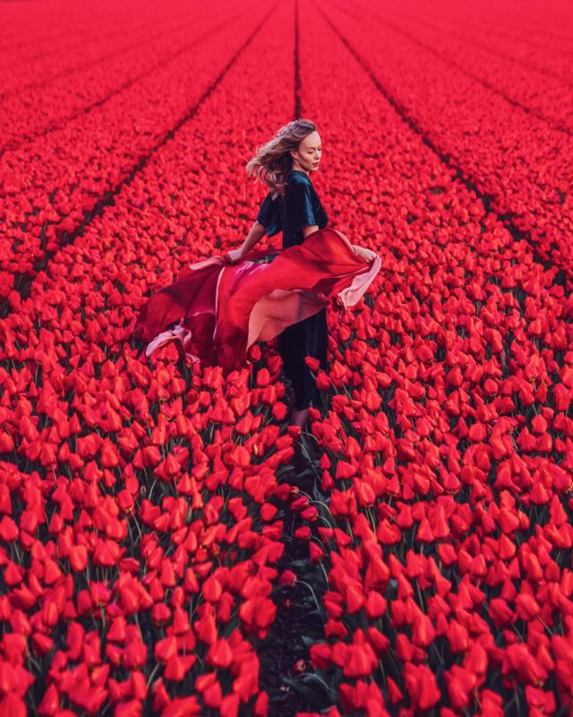 Kwikku, North Holland Kebun Tulip