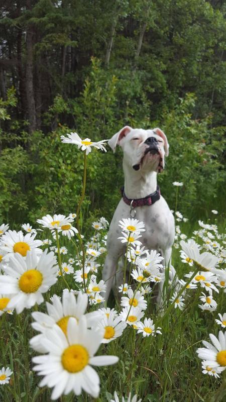 Kwikku, Hmmm sedang menikmati udara sejuk dan taman bunga nih