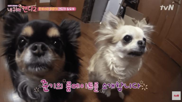 Kwikku, Ggabi dan Jjoonie  Lee Joon Gi