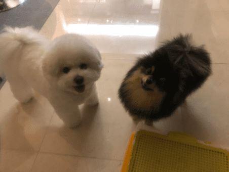 Kwikku, Yeontan  V BTS