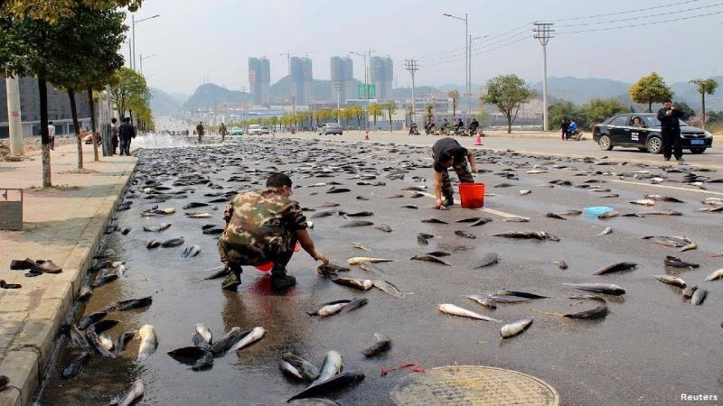 Kwikku, Fenomena Hujan Ikan