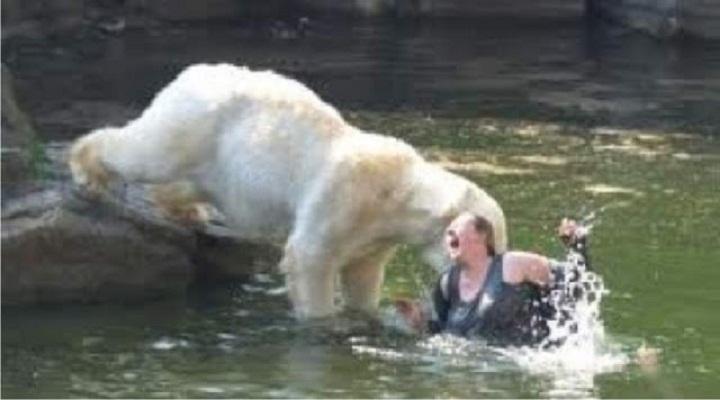 Kwikku, Merasa Lucu Seorang Wanita Melompat ke Kandang Beruang Kutub