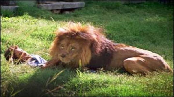 Kwikku, Terjun ke Kandang Singa karena Mendapat Bisikan