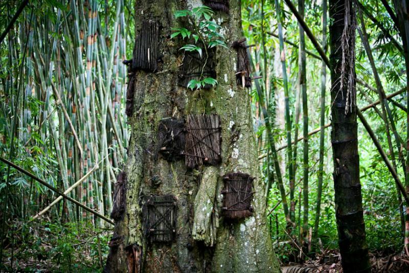 Kwikku, Pohon Tarra Tidak Pernah Mengeluarkan Bau Busuk