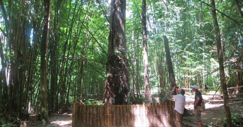 Kwikku, Cara dan Aturan Penguburan Bayi di Pohon Tarra