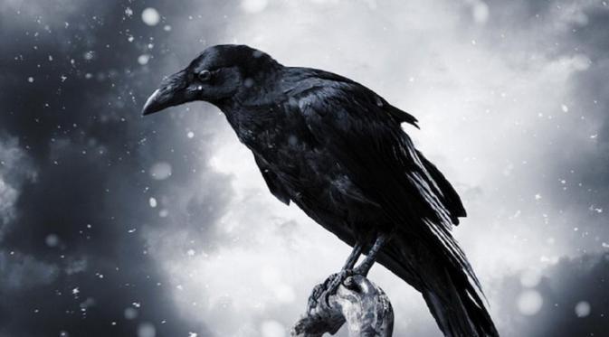 Kwikku, Kehadiran Burung Keblek Merupakan Pertanda Sesuatu
