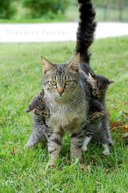 Kwikku, Si emak pasti lagi mikir nih bocahbocah kagak bisa apa liat ibunya santai dikit
