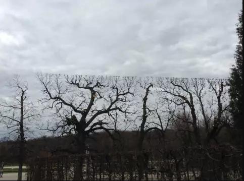 Kwikku, Beberapa pohon ini terlihat kompak dalam pembentukan rantingnya guys
