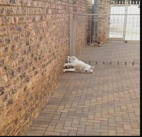 Kwikku, Foto ini bakal membuat kamu gagal paham dan merasa konyo melihat si anjing
