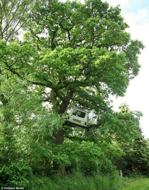 Kwikku, Nyangkut Di Pohon