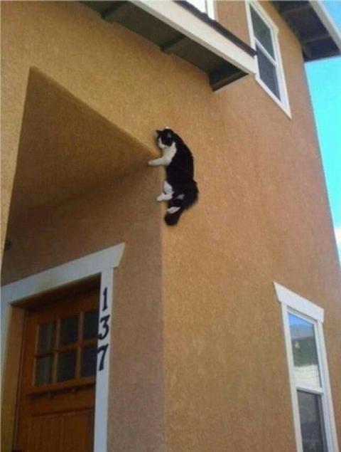 Kwikku, Kucing Memanjat Dinding
