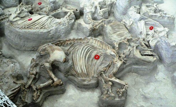 Kwikku, Kuburan Hewan