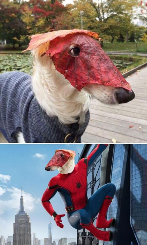 Kwikku, Anjing