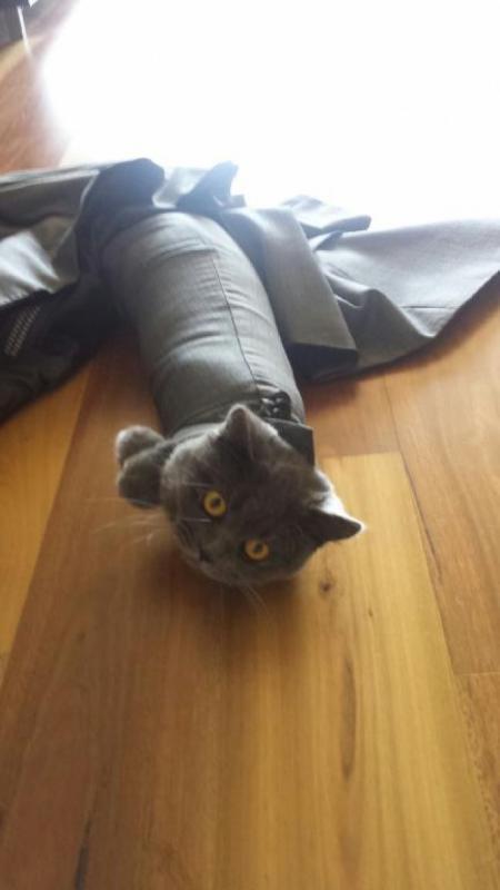 Kwikku, Ini juga si kucing maju gak bisa mundurpun gak mungkin haduuh Adaada aja ulah para hewan nih