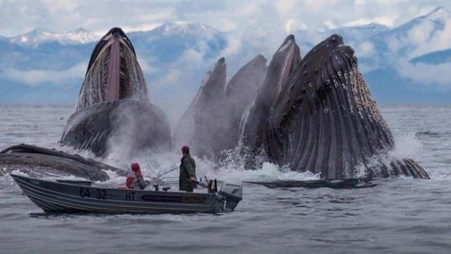 Kwikku, Menakjubkan ketika sedang asik memancing mereka di kejutkan dengan kemunculan beberapa paus yang naik kepermukaan secara bersamaan tak di sangka ternyata momen seperti ini juga sempat di abadikan oleh kamera