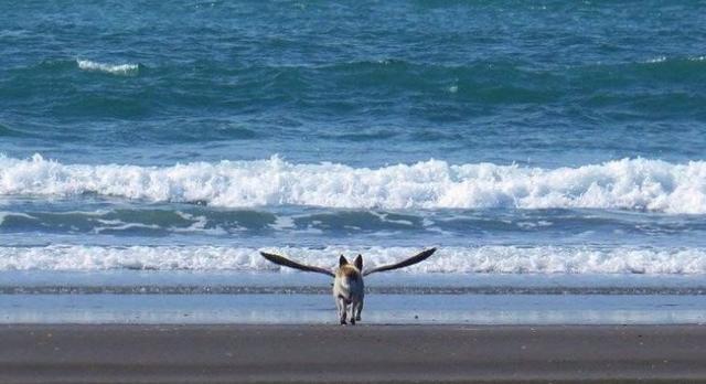 Kwikku, Foto ini tak sengaja di abadikan pada saat liburan musim panas Nampak seperti seekor anjing di dalam potret tersebut memiliki sayap dan sedang bersiap untuk terbang ke angkasa