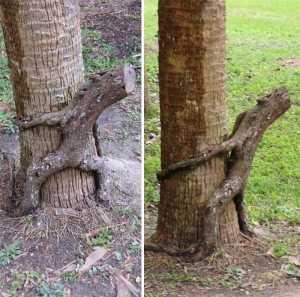 Kwikku, Pohon berbentuk si Groot
