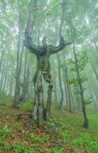 Kwikku, Bisa saja pohon ini awalnya adalah manusia yang di kutuk menjadi pohon Siapa tau