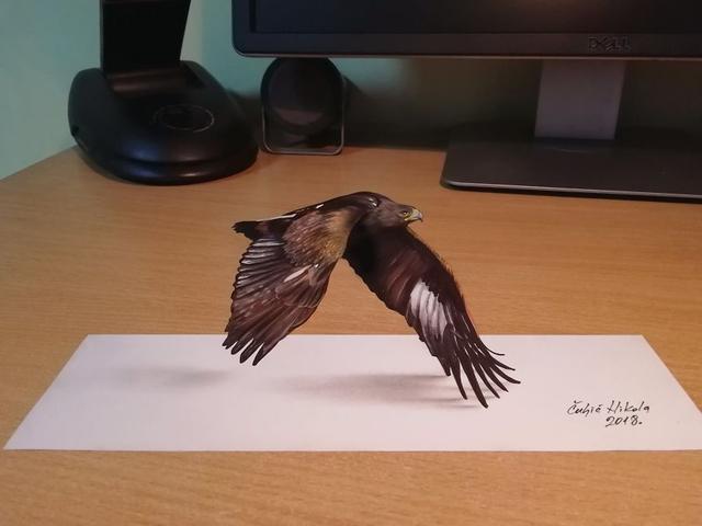 Kwikku, Burung