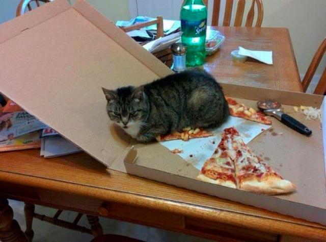 Kwikku, Garagara gak ngasih makan kucing Akhirnya si empus dudukin itu pizza