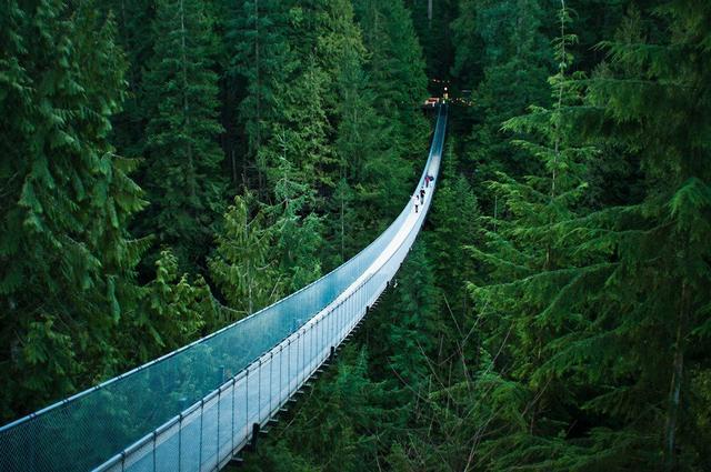 Kwikku, Capilano Bridge memiliki panjang  meter dan berada  meter di atas Sungai Capilanodi