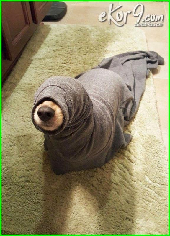 Kwikku, Aku hanyalah ulat bukan seekor anjing