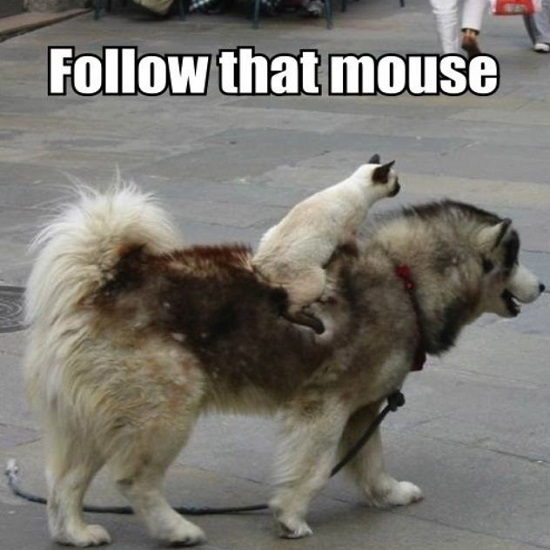 Kwikku, Ikuti tikus itu