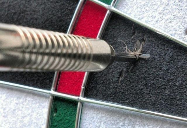 Kwikku, Ketika melempar darts gak nyangka bisa setepat ini mengenai nyamuk yang tengah terbang