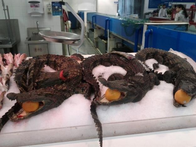 Kwikku, Ternyata di Negara China menemukan seekor hewan buaya hidup yang di pajang dalam supermarket adalah hal yang biasa